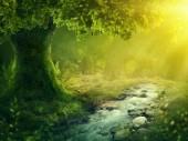 Hluboko kouzelný les s sunshine