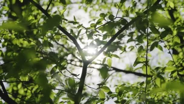 Detailní záběr paprsky svítí skrz svěží zelené listy