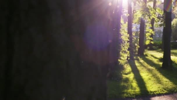 Close up Sunbeams shining through treesin a city park at sunset. Slow motion.