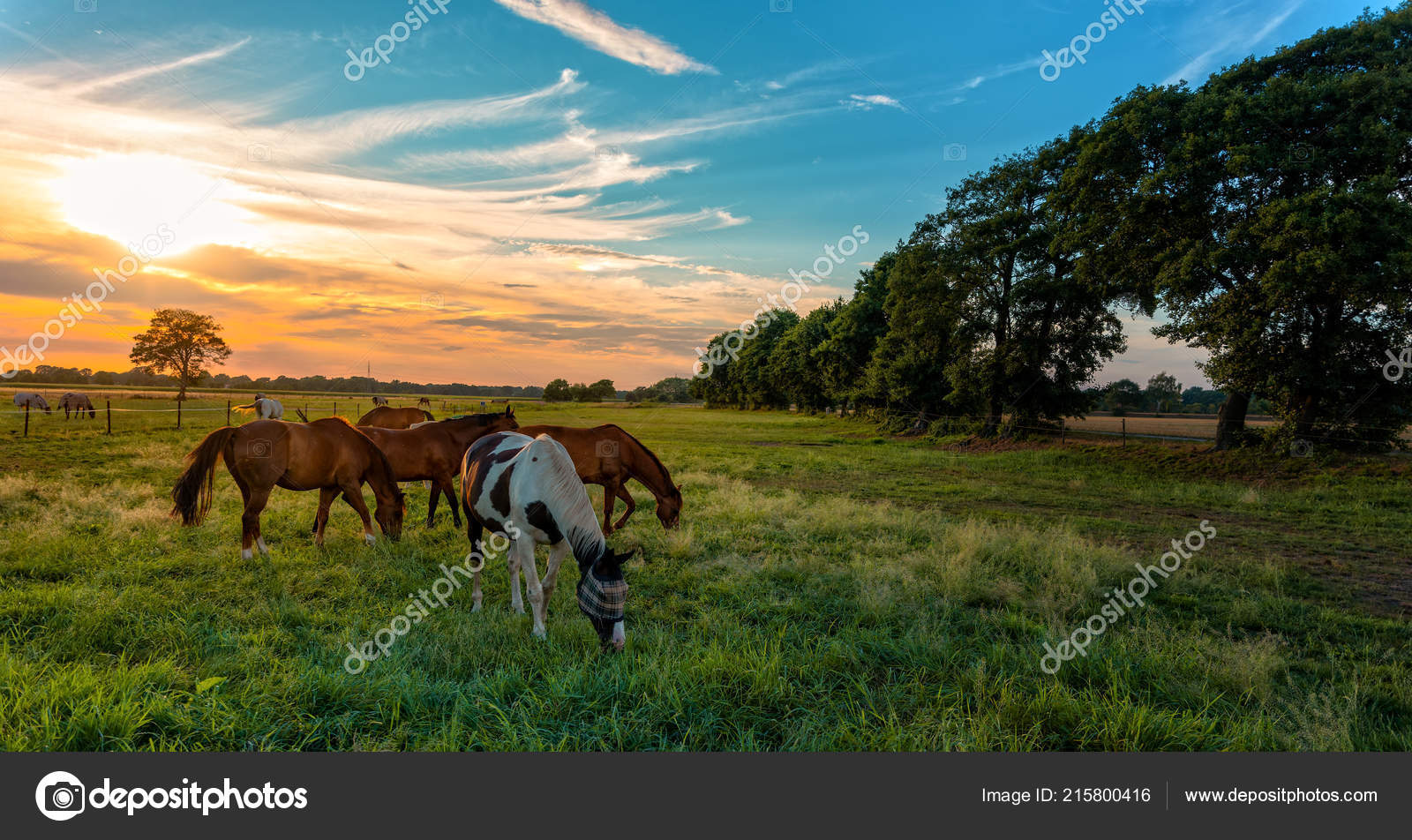 Pastvu Pasoucí Koně Podzim Koni — Stock Fotografie © dar19.30  215800416 b17cff34ca