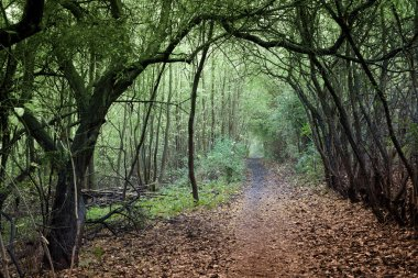 Scene from dense forest in Denmark Scandinavia