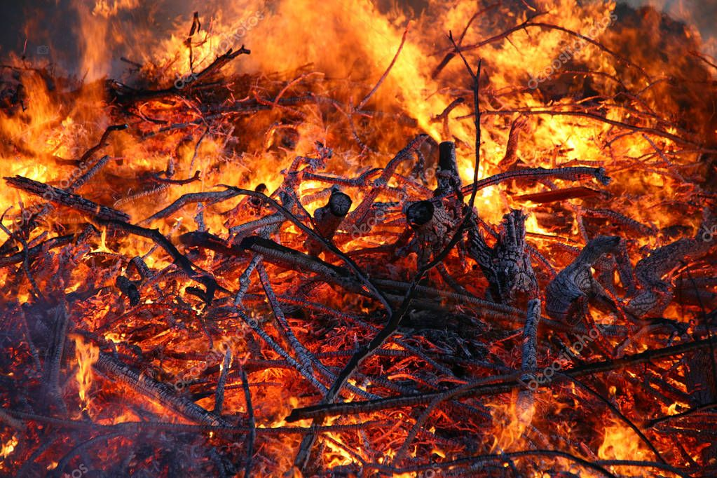 Controlled fire of trees and branches