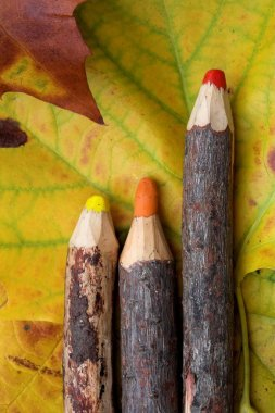 Rudimentary wood pencils on colorful autumn leaves