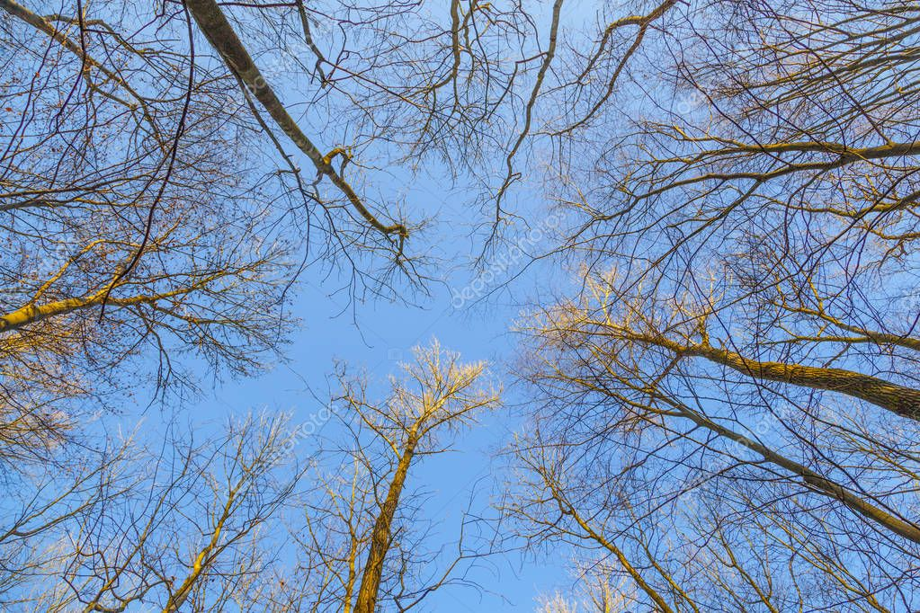 harmonic pattern of trees in forest