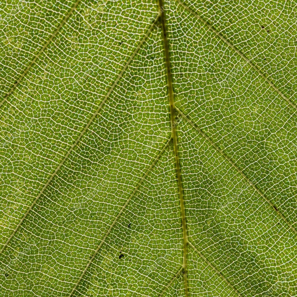 detail of leaf gives a harmonic green background