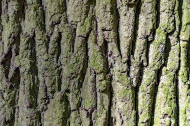 Detail of oak tree bark gives a harmonic background stock vector