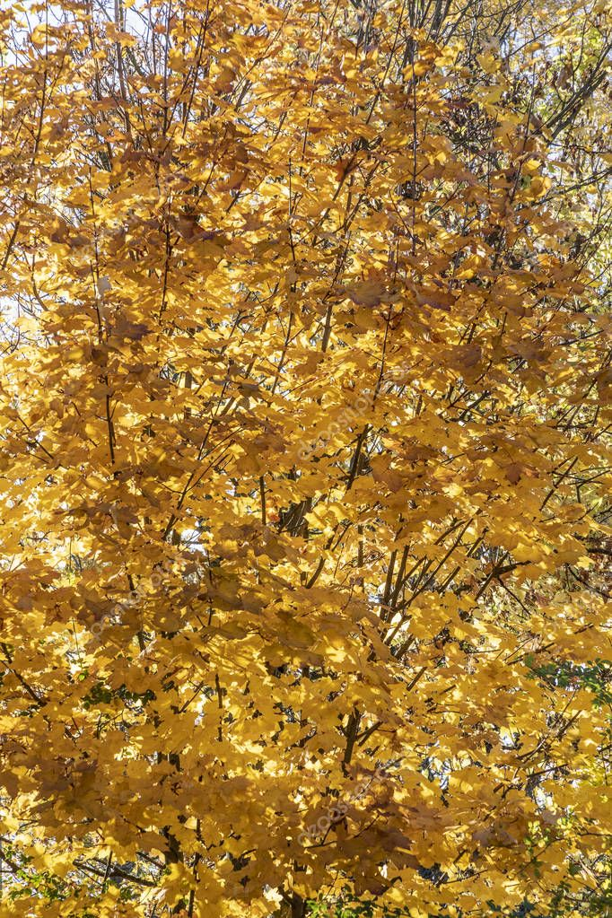 leaves in autumn color gives a harmonic background