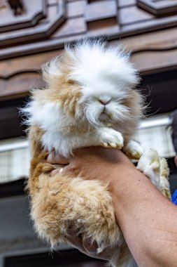 "Картина, постер, плакат, фотообои ""волосатый кот держит в руке "", артикул 307994404"