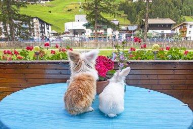 """Картина, постер, плакат, фотообои """"кролик и волосатый кот сидят за столом и смотрят на пейзаж """", артикул 307994408"""