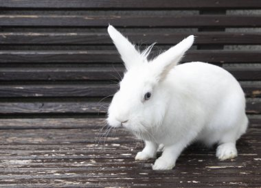"Картина, постер, плакат, фотообои ""милый белый кролик на потрепанной скамейке "", артикул 307994422"