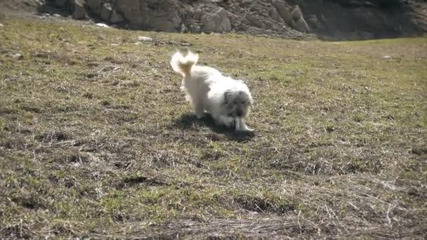 Am weißen Berghund mit einem Knochen, Zeitlupe spielen
