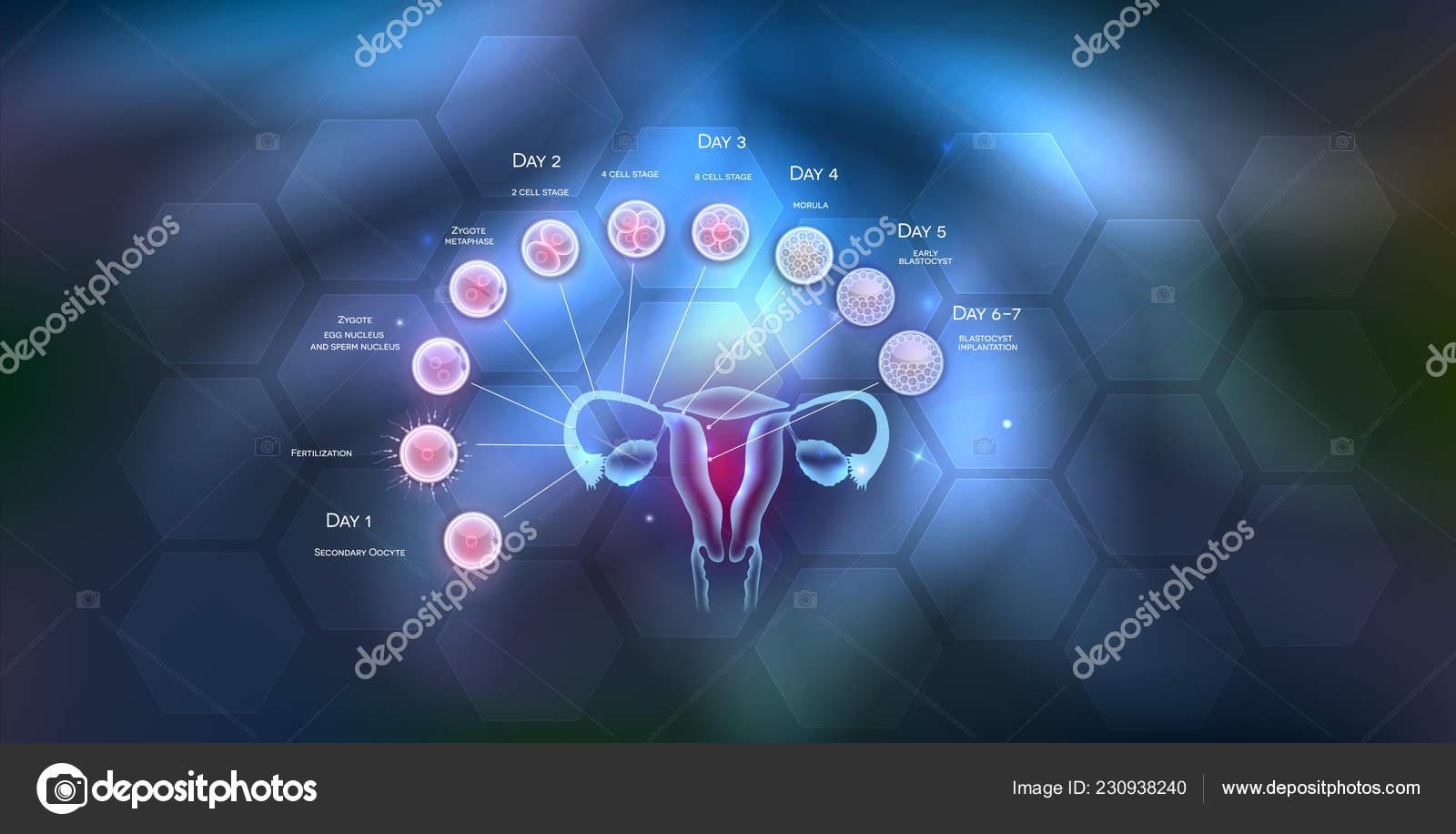 krupnim-planom-ovulyatsiya-spermi