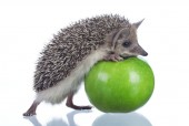 hedgehog and green apple on white background