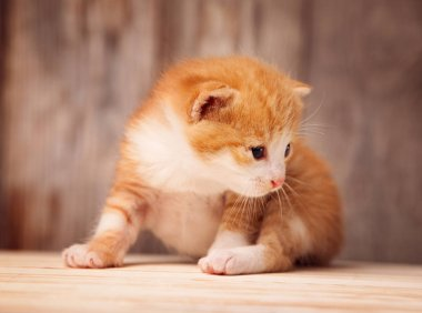 ginger kitten at old wooden boards background