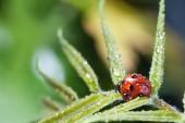 Fotografie close-up view of red ladybug on green leaf