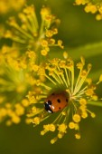 Photo high angle view of ladybug on green dill