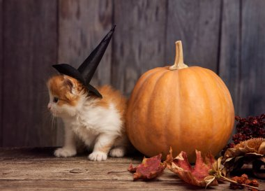 halloween pumpkin and ginger kitten in witch hat on wooden background with leaves