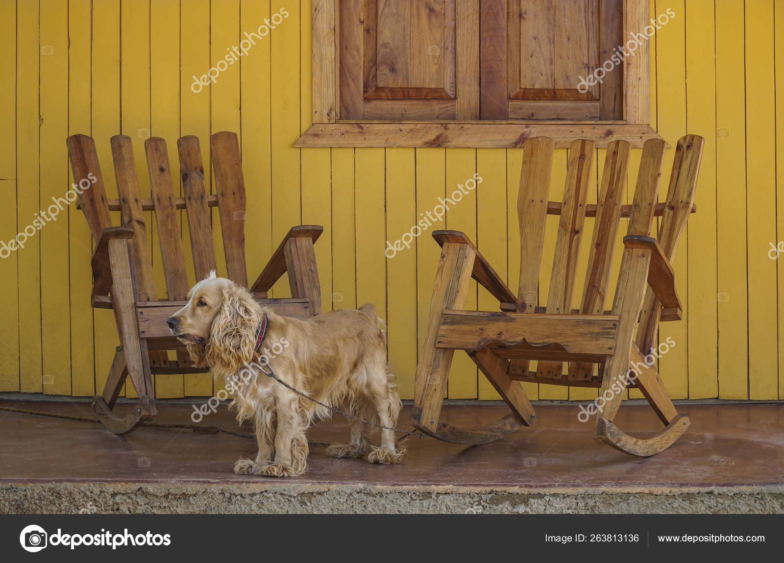 Brilliant A Dog And Wooden Rocking Chairs On Veranda Stock Photo Squirreltailoven Fun Painted Chair Ideas Images Squirreltailovenorg