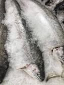 nyers halak jégen egy Fishmarket