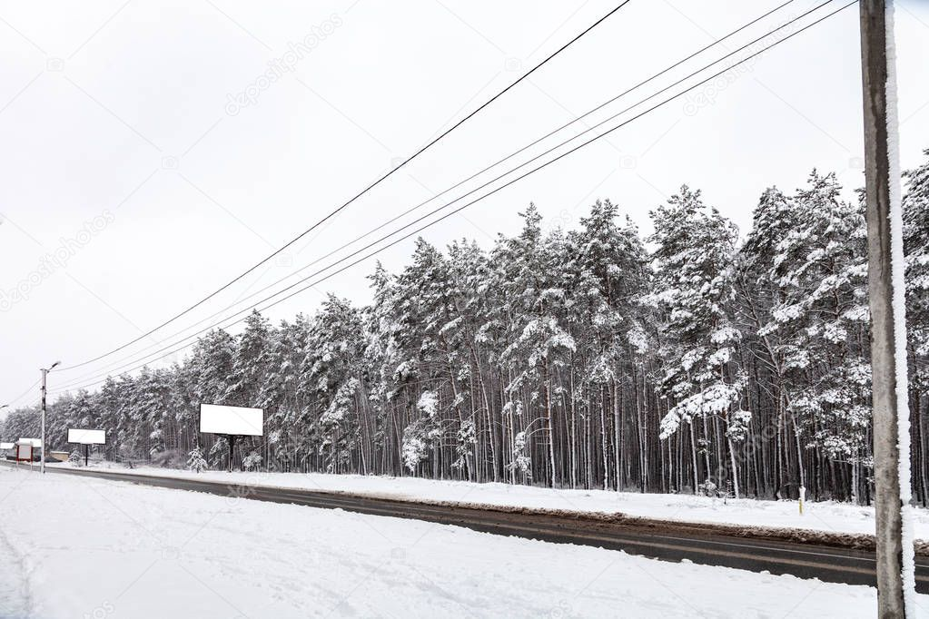 Coniferous forest after snowfall, pines covered with white snow, road, power line, empty billboards