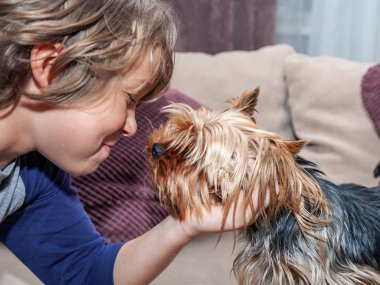 The boy caressed his dog Yorkshire terrier, close-up