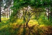Fotografie wunderschöne Naturlandschaft, Jahreszeit, Tageszeit