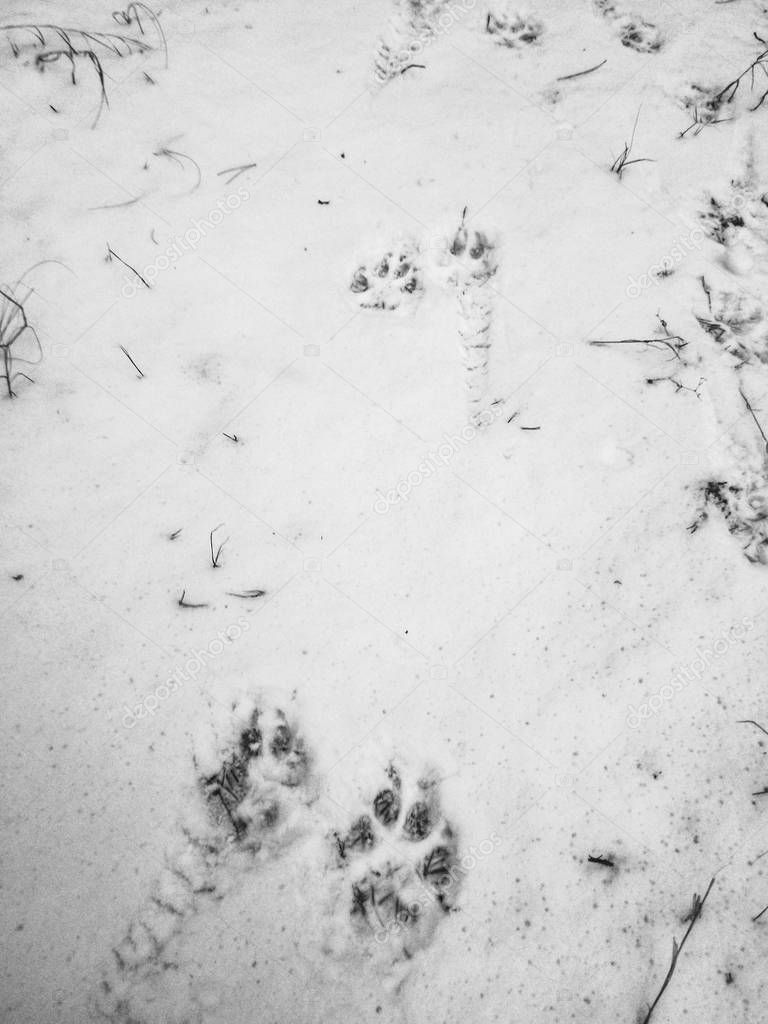 Close up view of paw prints on snow