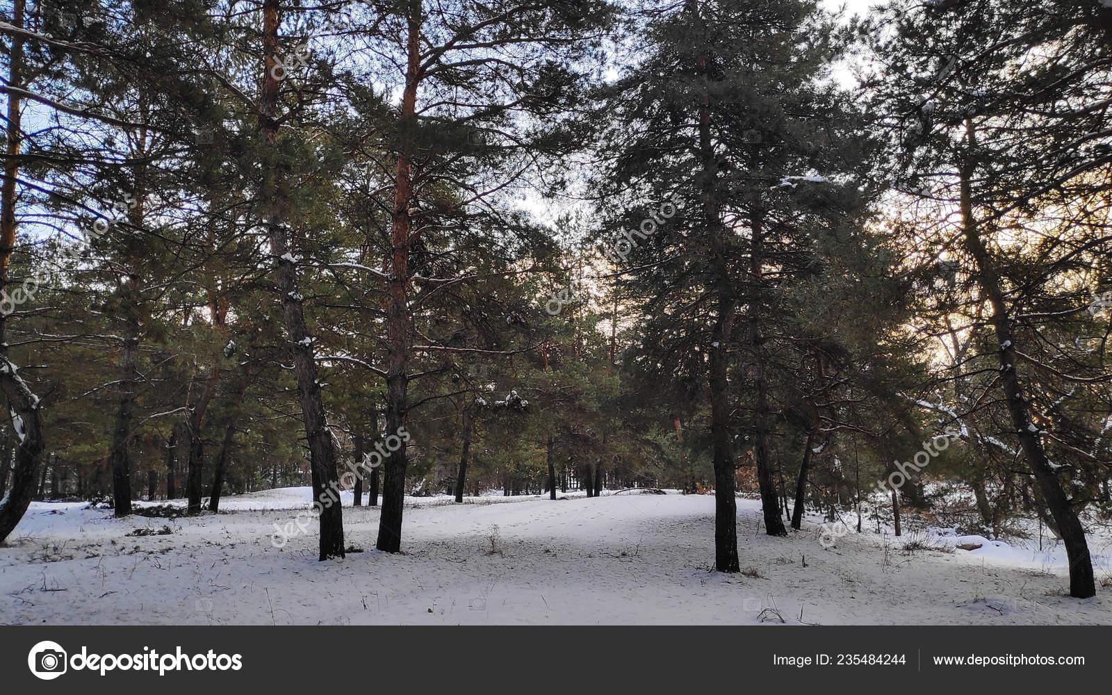 Paysage Forêt Hiver Beaucoup Neige Dans Forêt Arbres Dans Neige —  Photographie fotolubitel2017 © #235484244