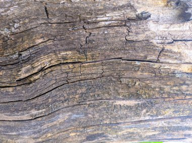old tree texture, tree bark closeup, wooden background