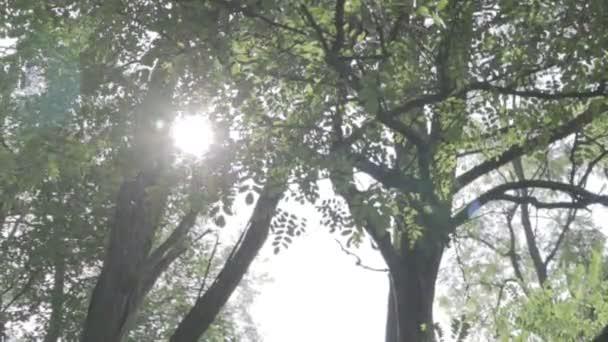 paprsky slunce skrz větve stromu.