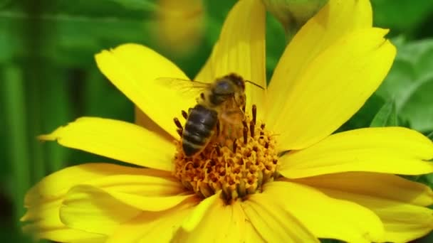 beautiful yellow flower. bee on a flower. bees on flowers in summer