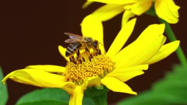 Gyönyörű sárga virág. méhecske egy virágon. méhek a virágokon nyáron