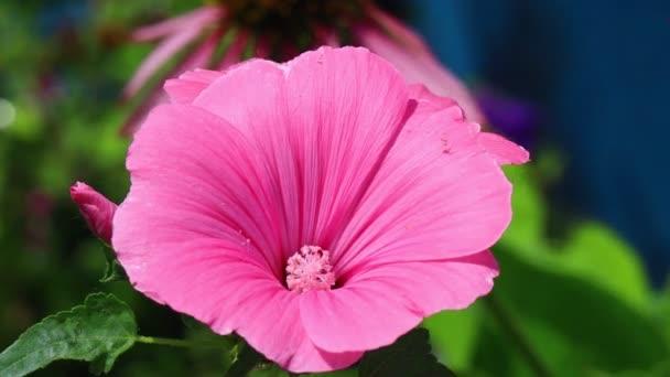 krásné růžové květiny. fialové květy bluebells.