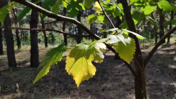 krásné listí na větvi. žluté podzimní a zelené listy. stromy v lese