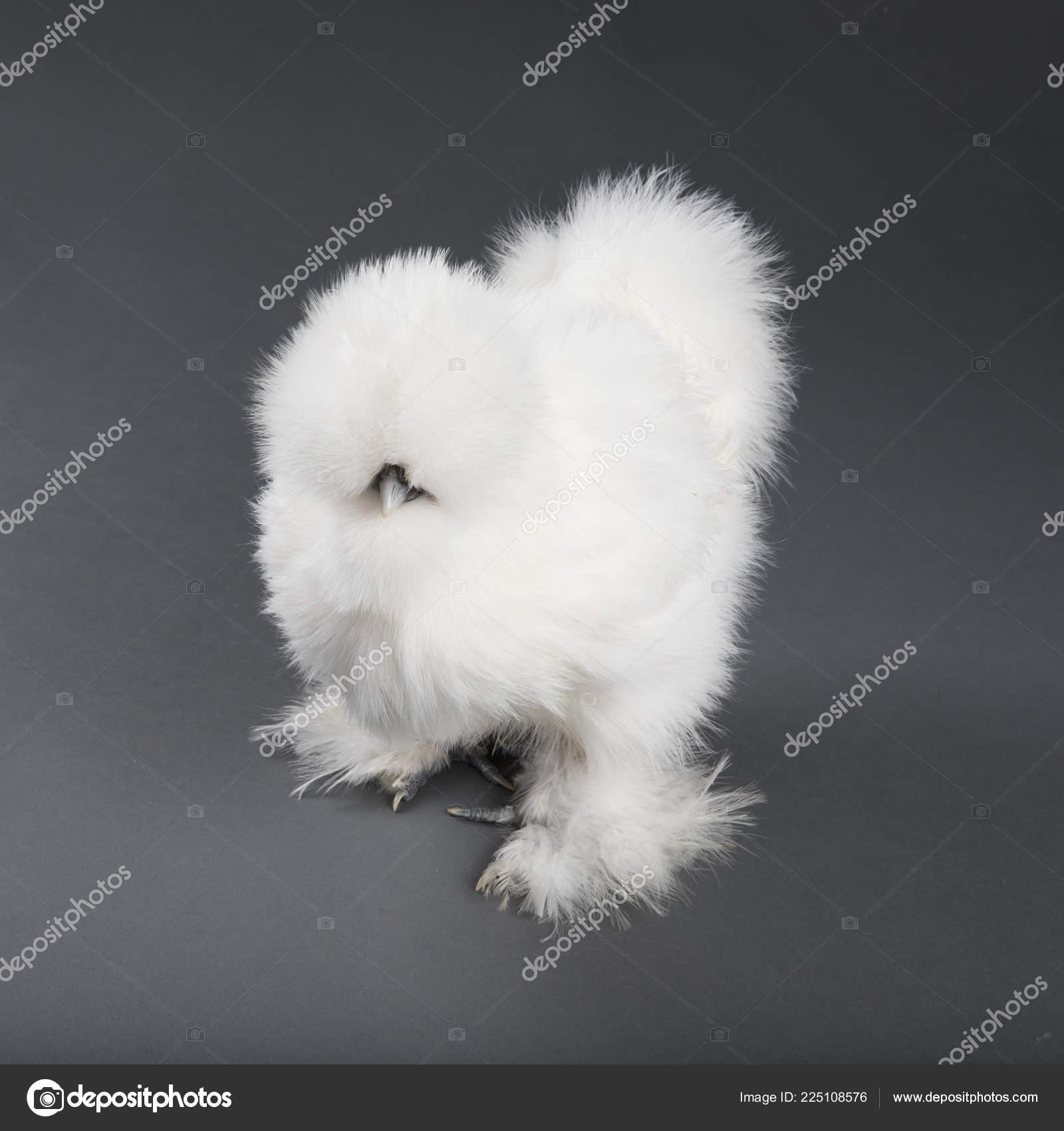 Μαύρο πουλί για το λευκό μουνί