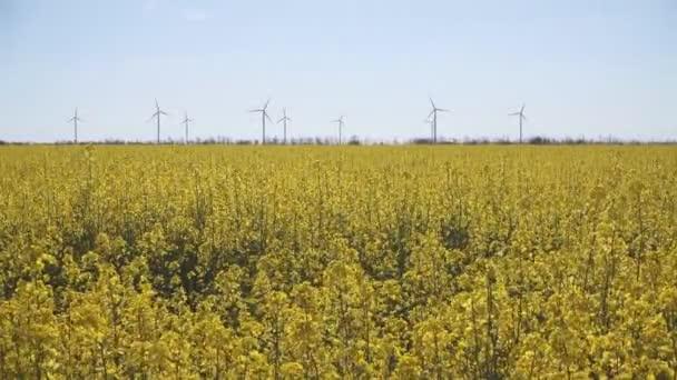 Větrné elektrické generátory v řepkové pole
