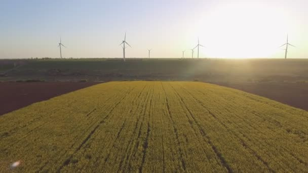 Wind-Powered Electrical Generators at Rapeseed Field. Aerial view