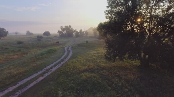 foggy road. River valley bent early morning fog clouds. yellow orange sunrise horizon. Aerial drone beautiful Ukraine nature landscape. Romantic cinematic mood