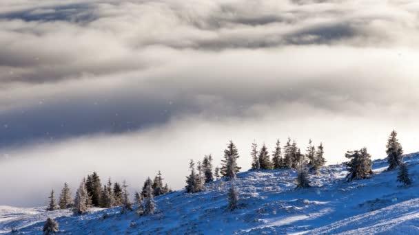 Klesající v zimní horské sněhem zasněžené stromy, pomalý pohyb