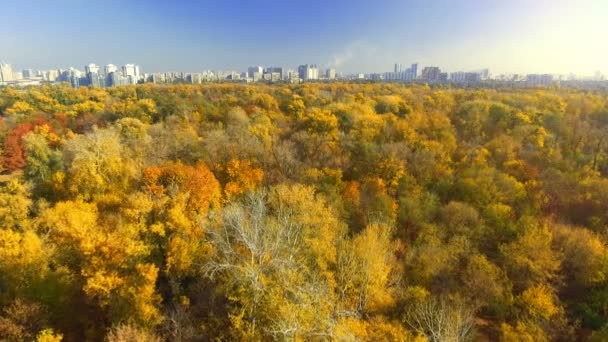 AERIAL: Flying above the stunning colorful treetops on sunny day. Beautiful autumn trees in yellow