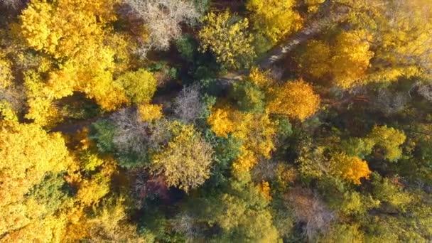 Őszi fa felülről. Táj. Légi klip