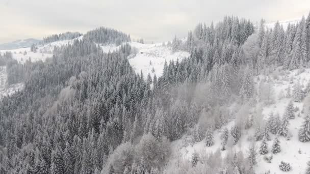 mountains in winter. Rural landscape. Trees covered with snow. Happy New Year. frozen very beautiful trees. Winter tale