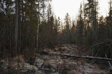 """Картина, постер, плакат, фотообои """"дыхание зимы в лесу, у берега лесного озера """", артикул 225206798"""