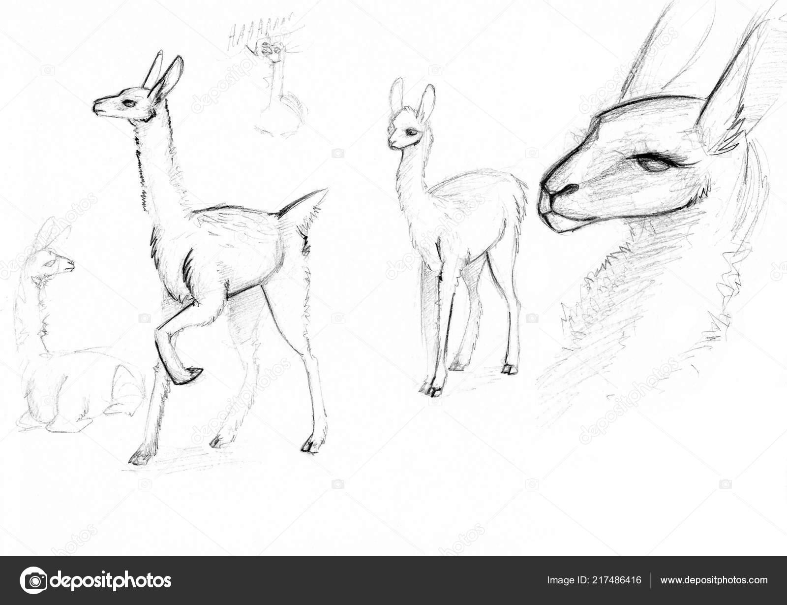Desenhos Lama Branco Fundo Lápis Simples Stock Photo