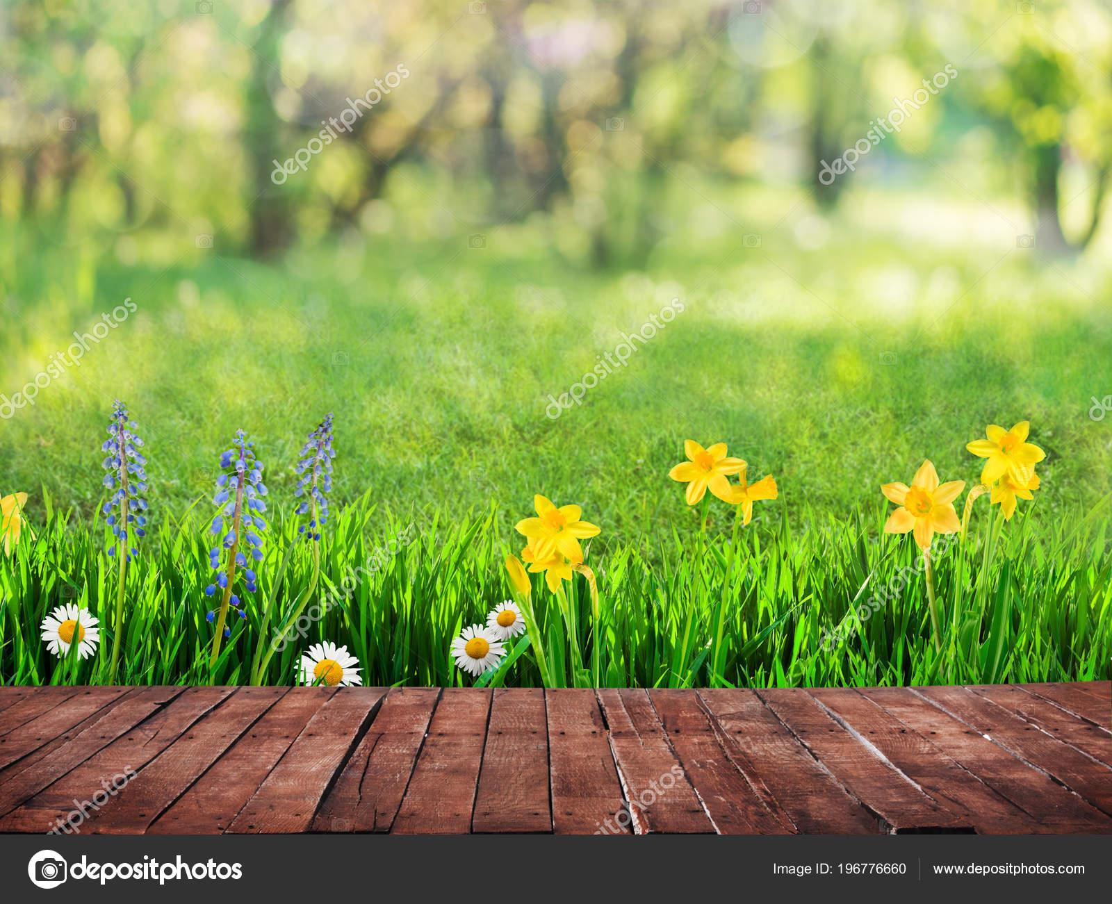 Fondo Primavera: Fondo Primavera Con Flores Piso Madera