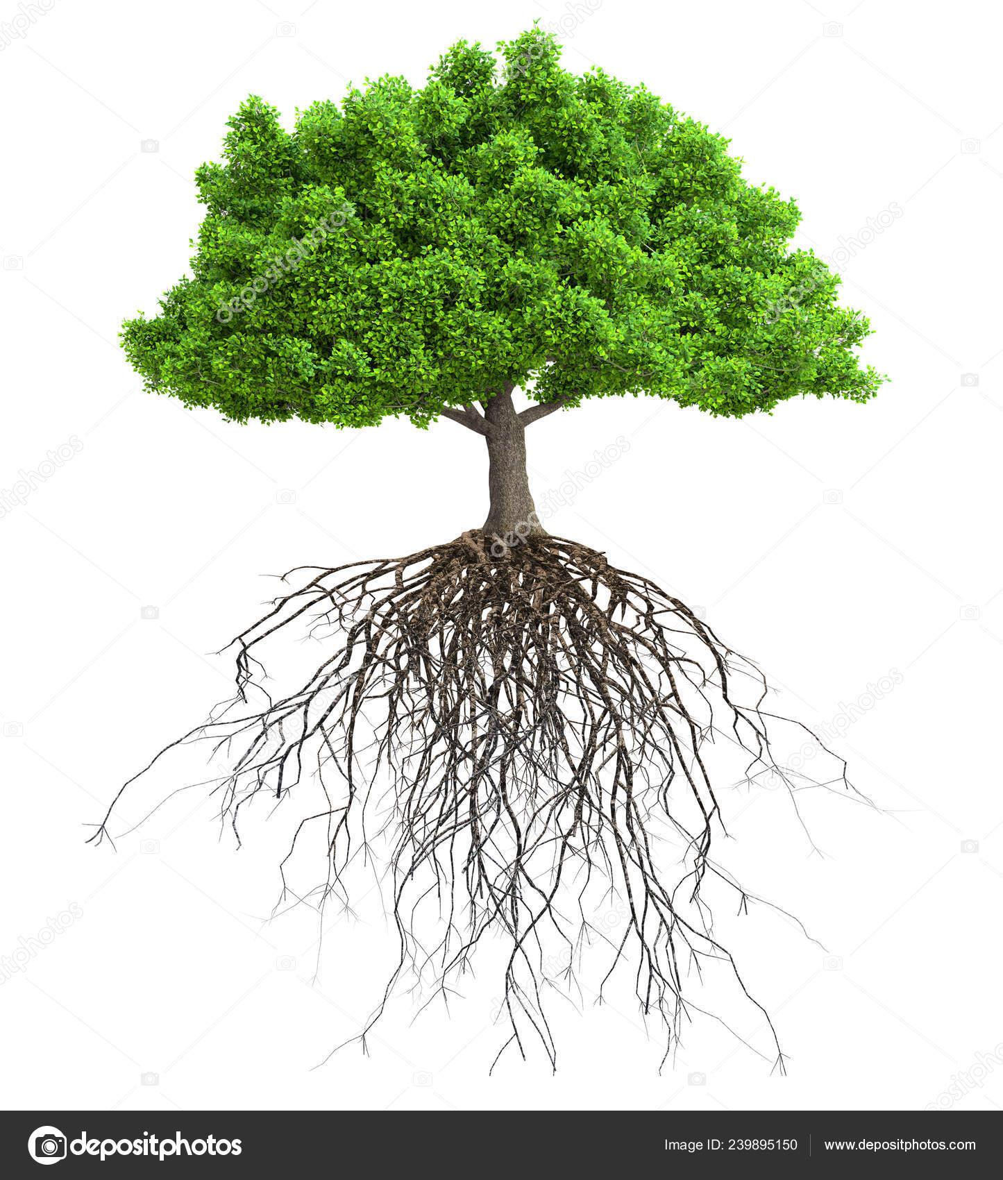 Дерево Корнями Изолированных Иллюстрация — Стоковое фото ...