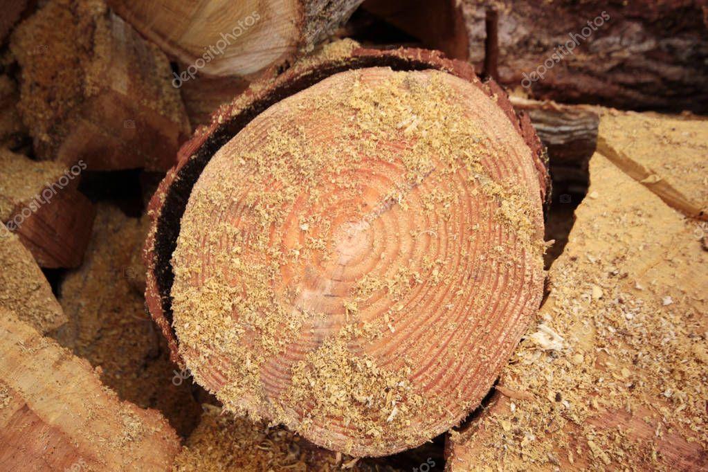 cut logs for winter