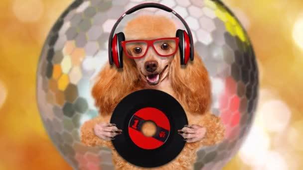 Cinemagraph - zene fejhallgató vinil rekord kutya. Indítványt fotó.