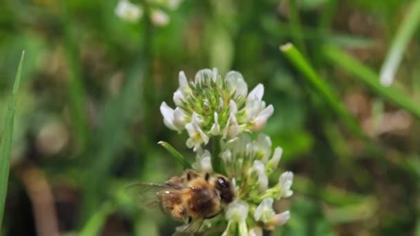 Včely letící do kvetoucího zpomaleného květu
