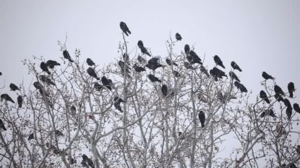 Skupina vrchy na stromě zimní Blizzard